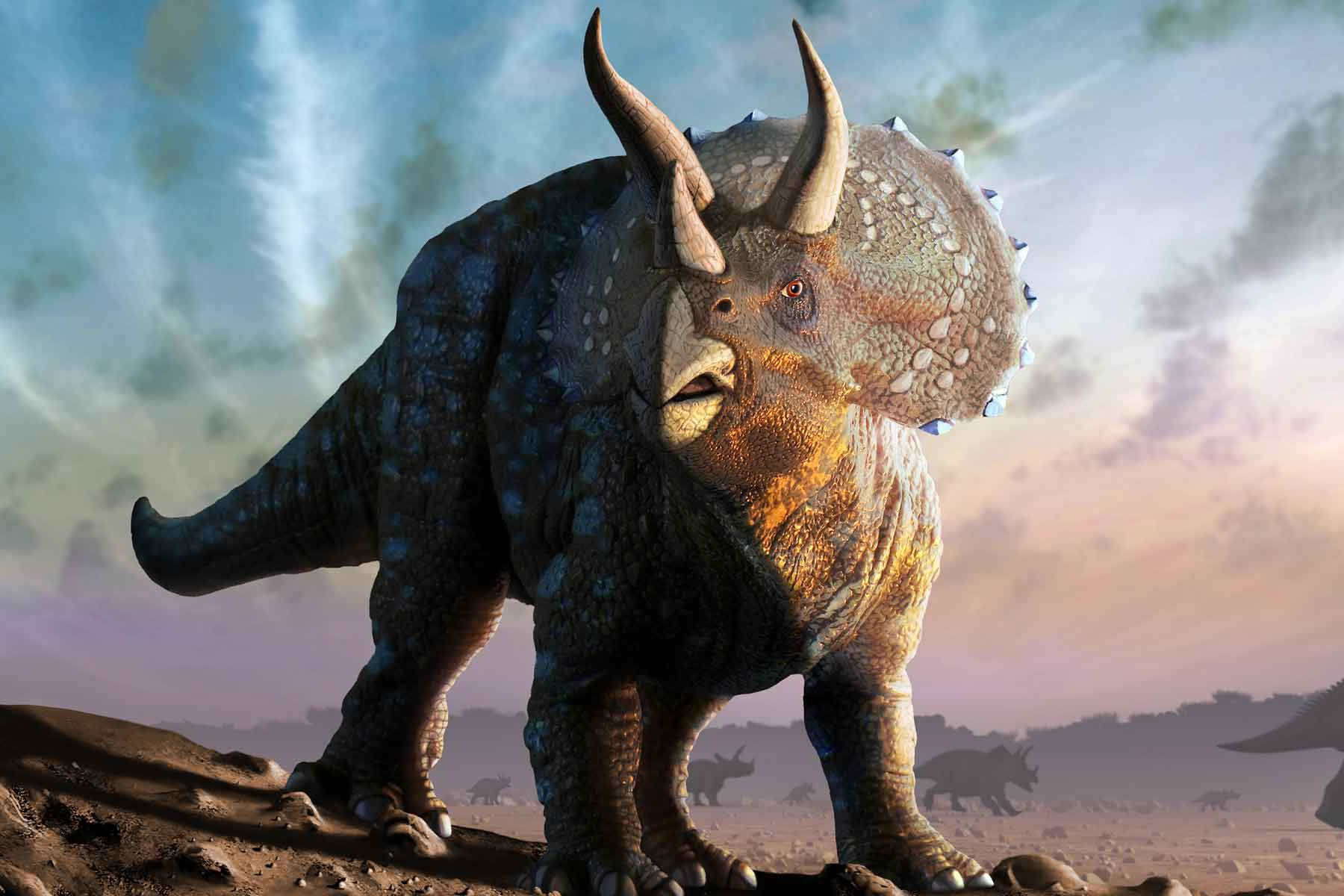 A Triceratops dinosaur.