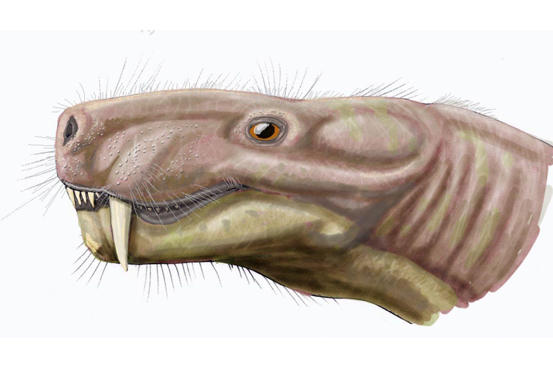 Digital illustration of the dinosaur, Arctognathus.