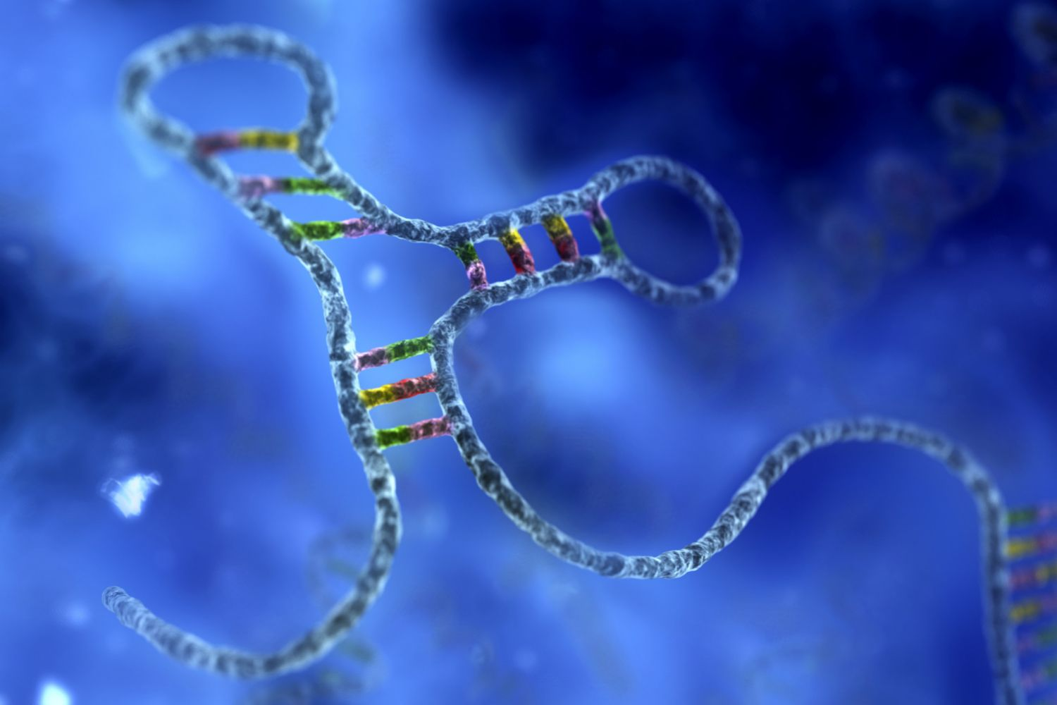 Rna  Definition And Types