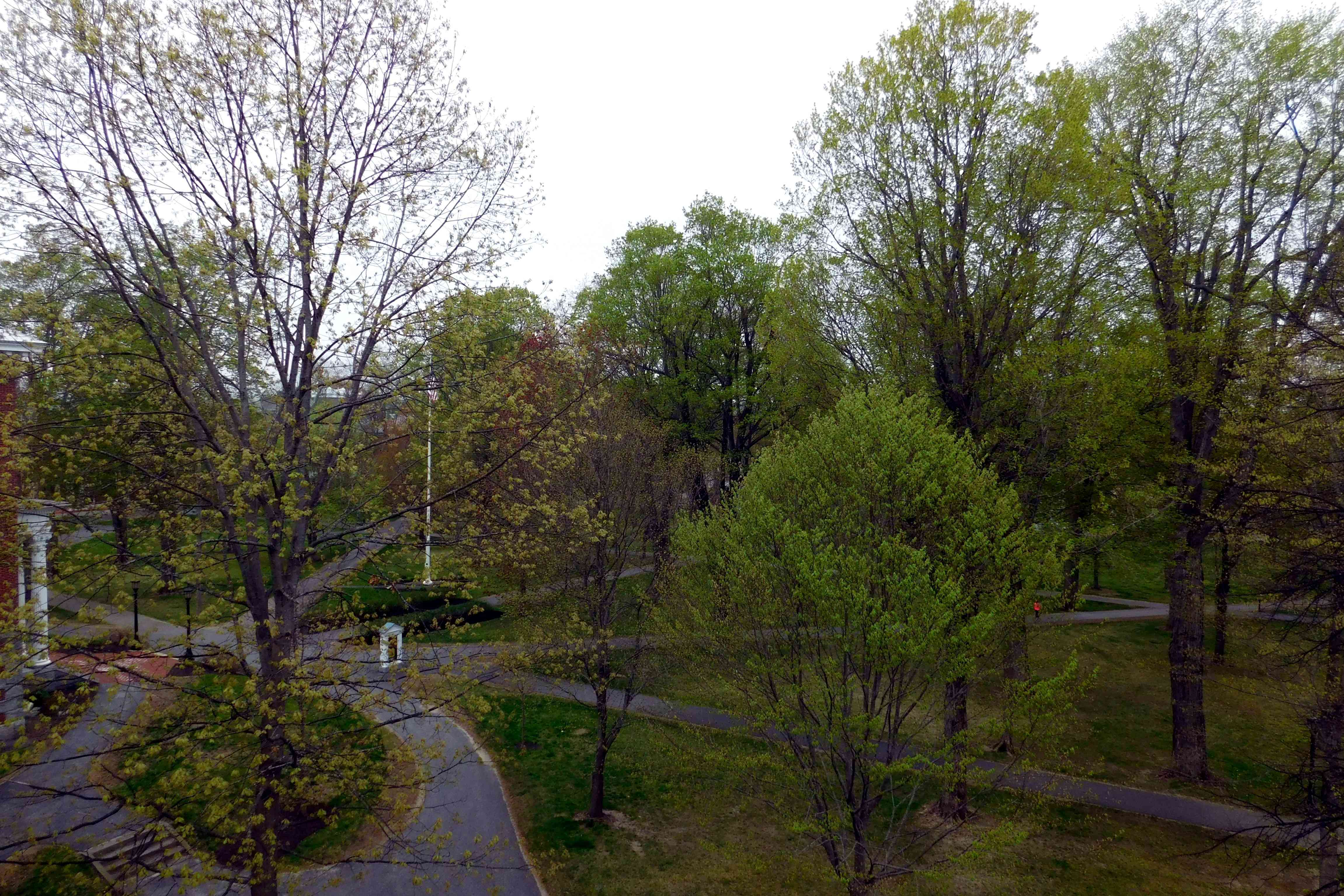Green Scenery at Bates College