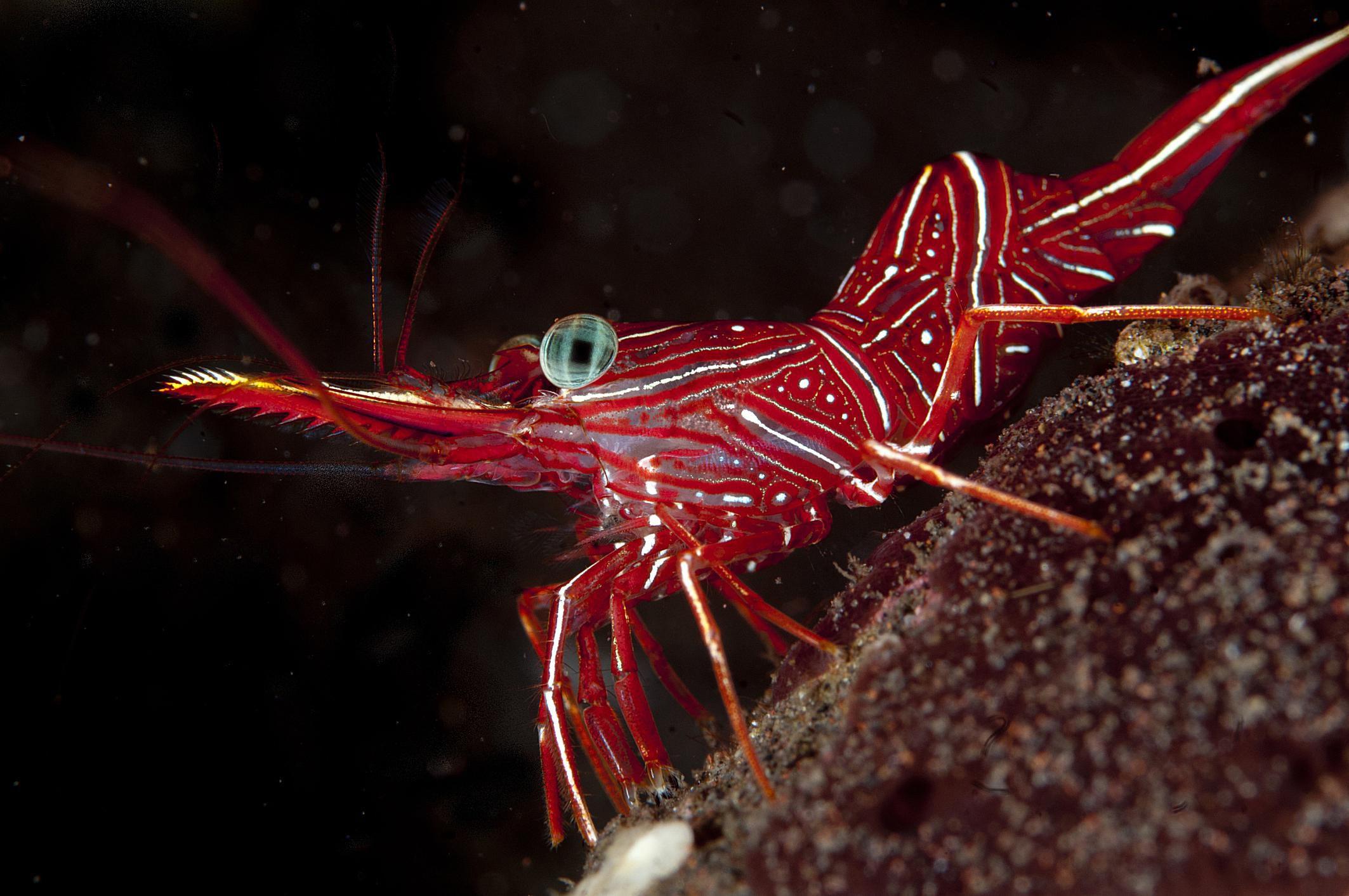 Arthropoda - Gulf Specimen Marine Lab  |Phylum Arthropoda Marine