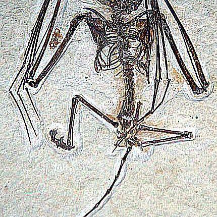icaronycteris