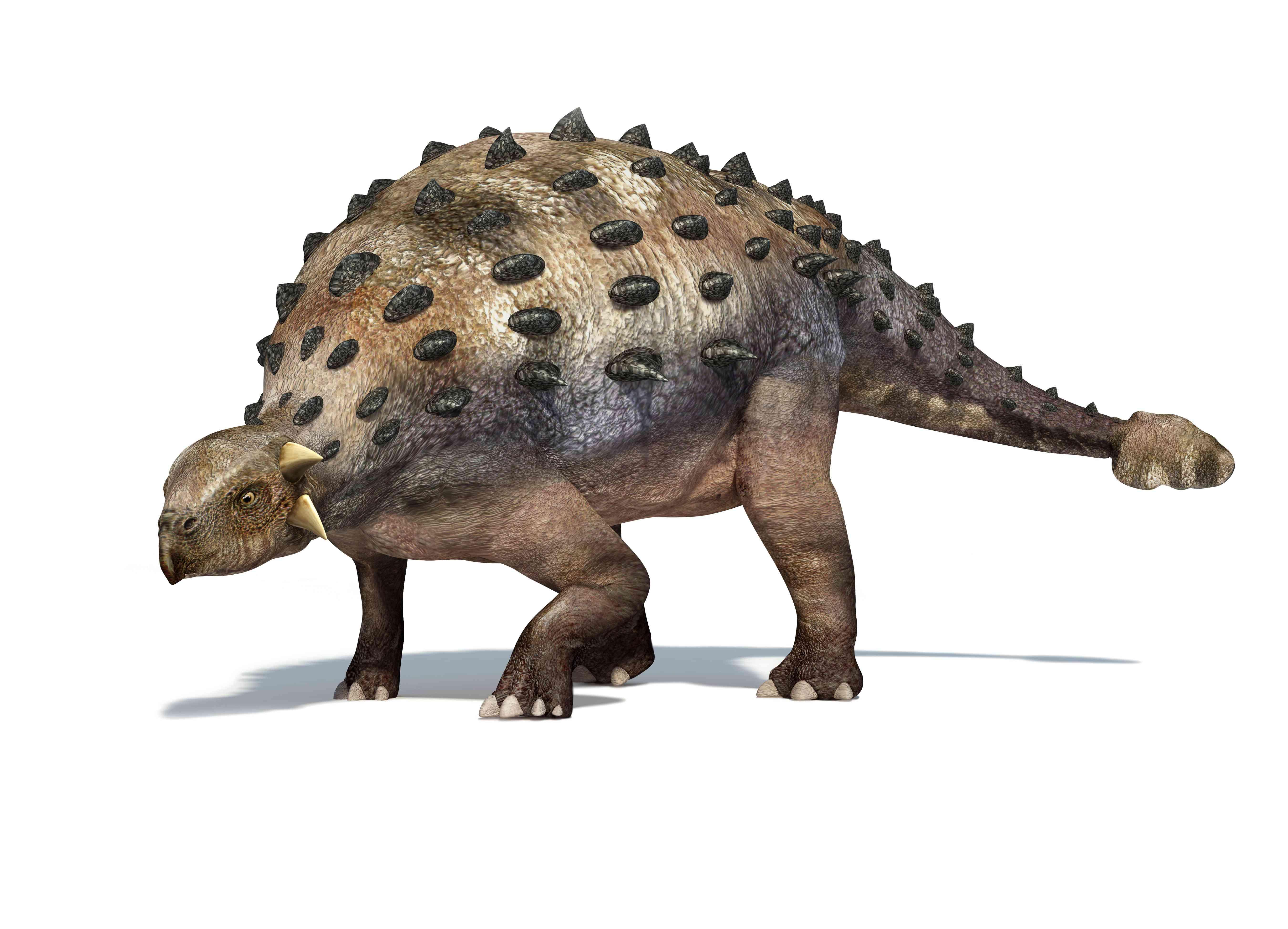 Ankylosaur dinosaur, artwork