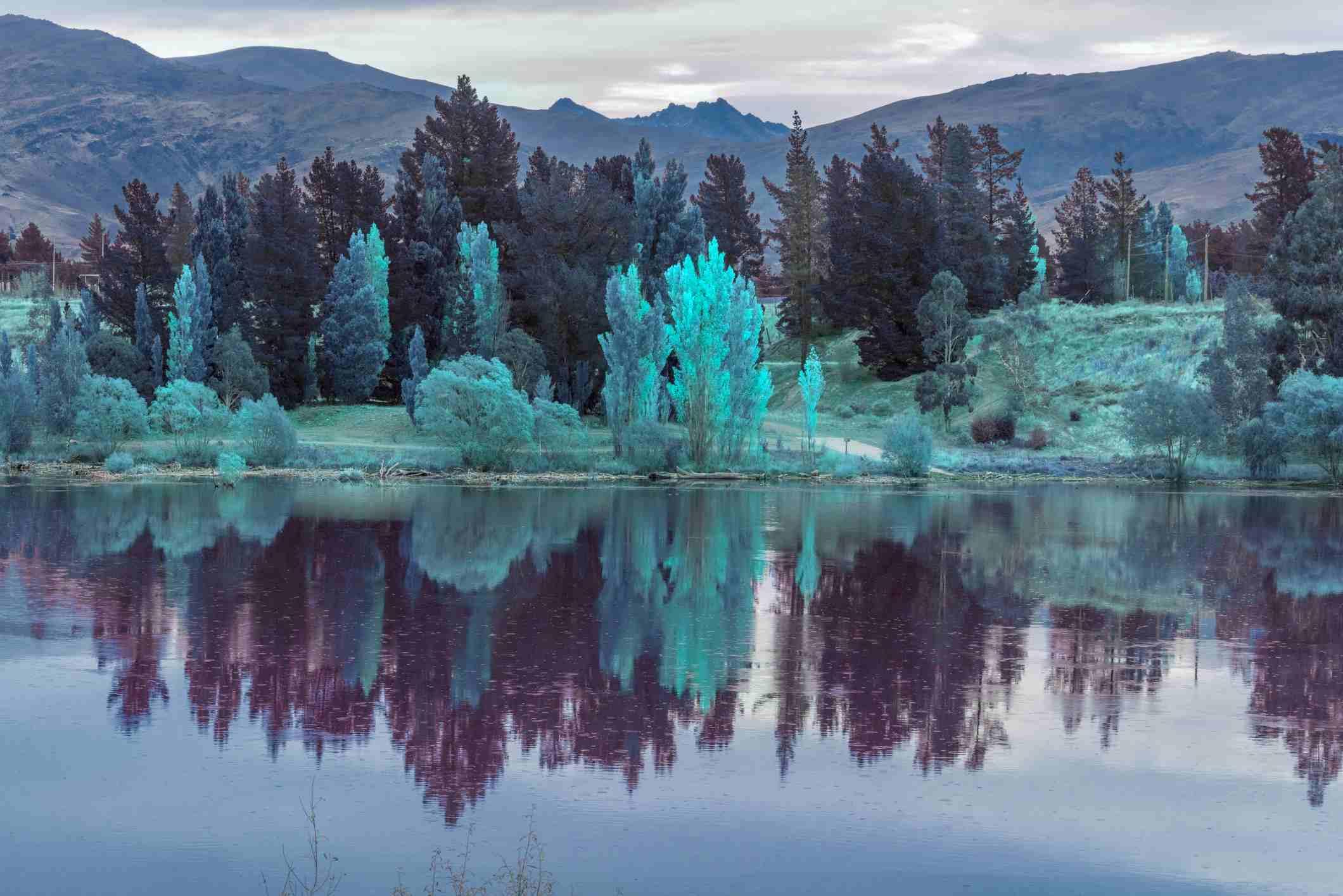 lake reflection,colorful tree landscape