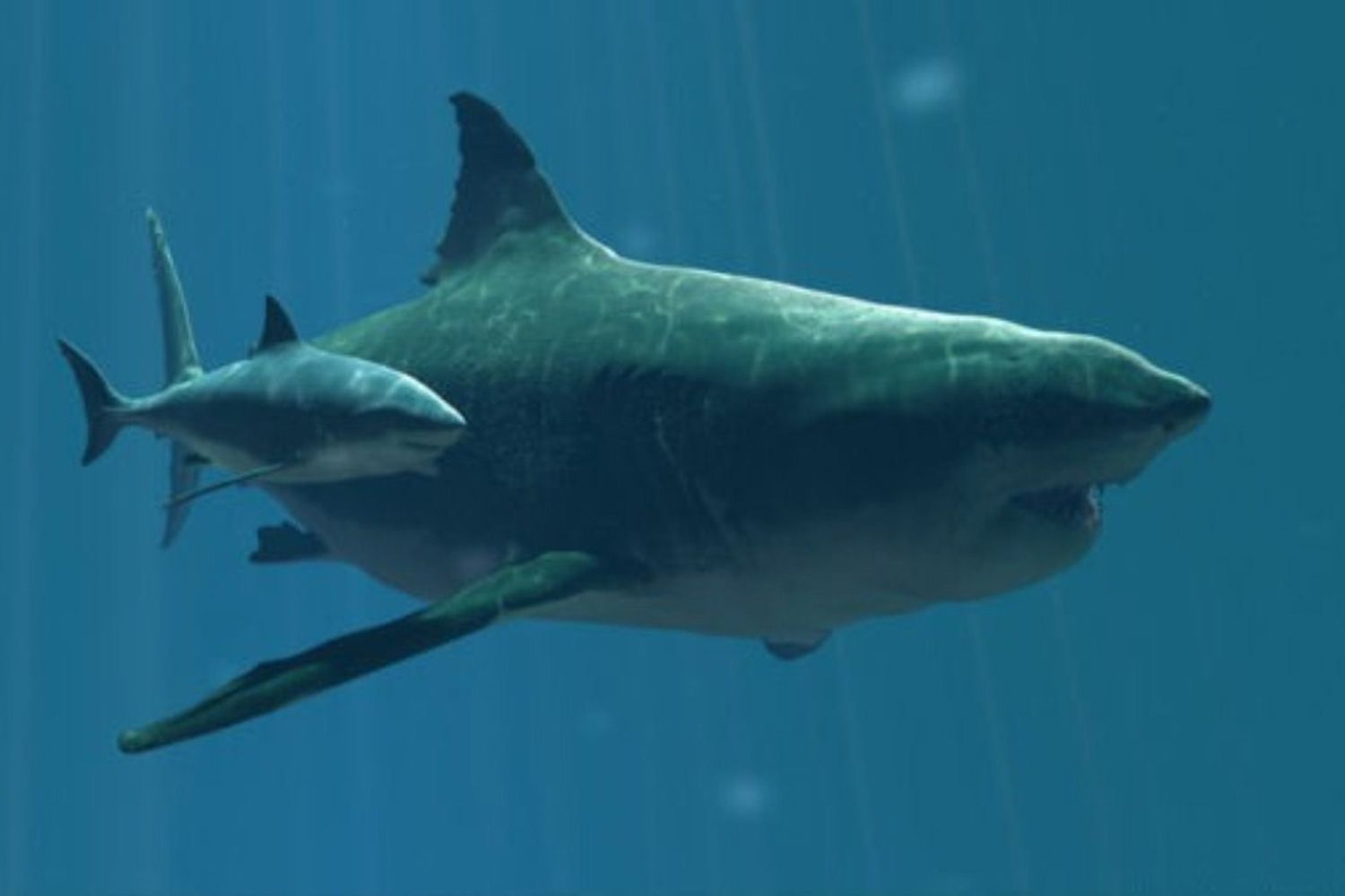 A Megalodon and its offspring