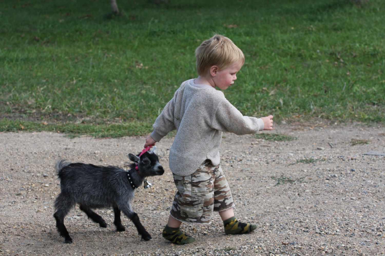 Νεαρό αγόρι τράβηγμα κατά μήκος της νέας πυγμαχικής αίγας