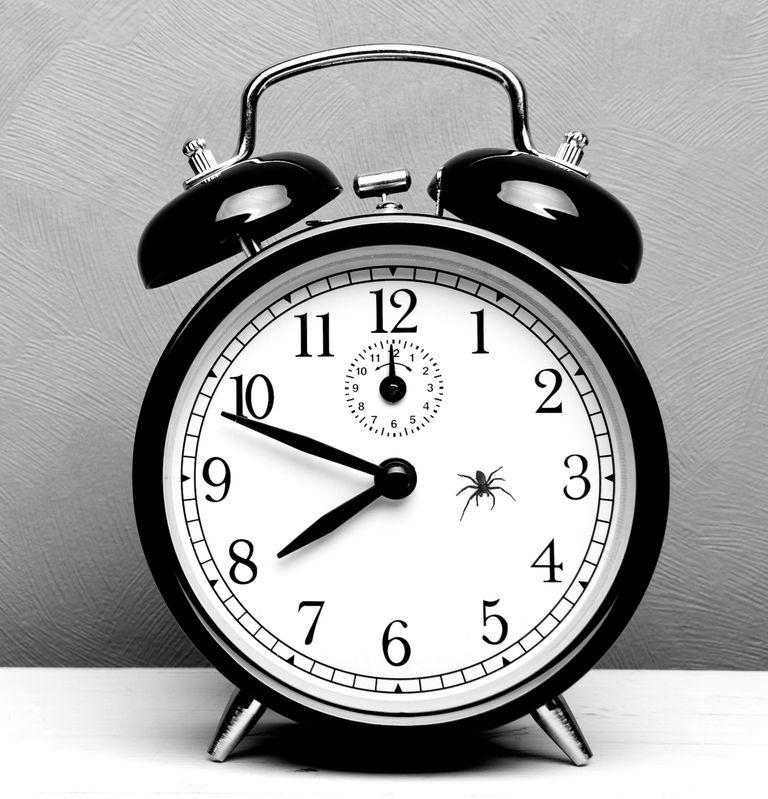 spider in a clock