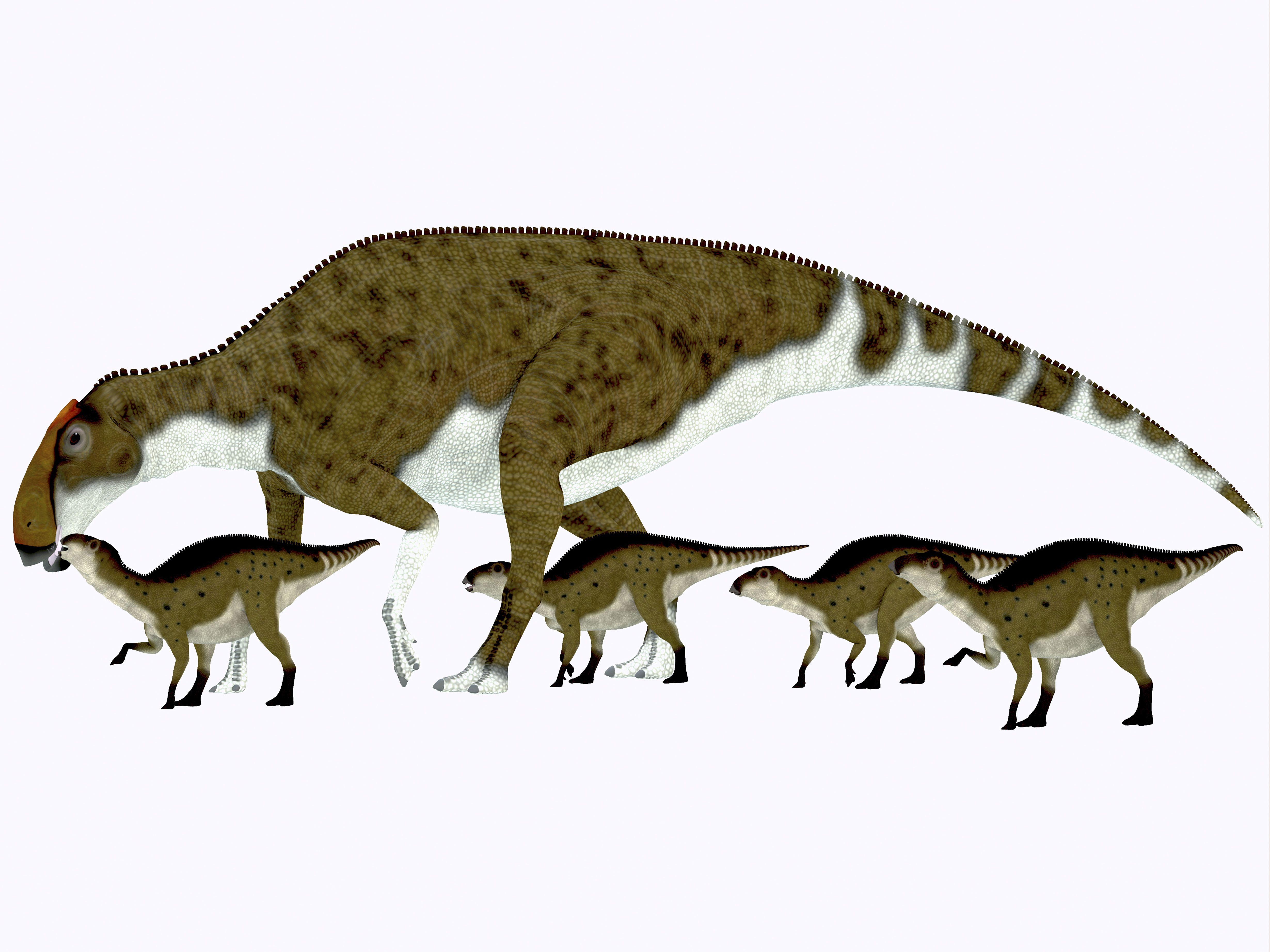 Brachylophosaurus with offspring.