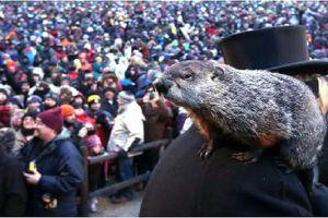 Groundhog at Gobbler's Knob in Punxsutawney, PA.