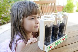 Young girl looking at seedlings grow
