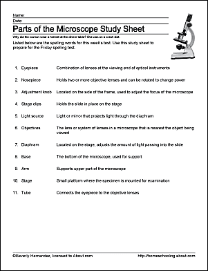 Microscope Parts and Use Worksheet Answers