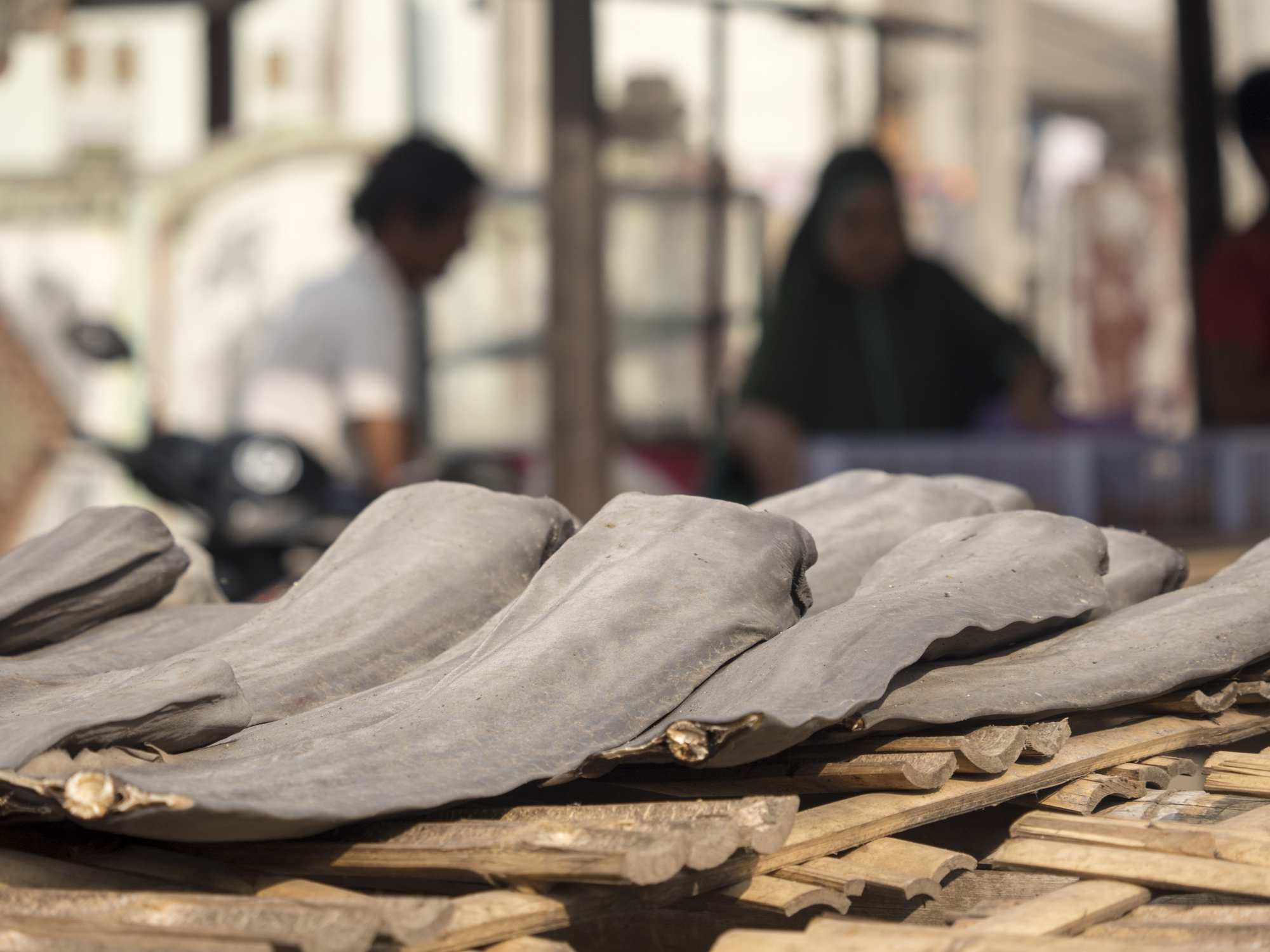 Shark fin trade and de-finning at fish market in Indonesia