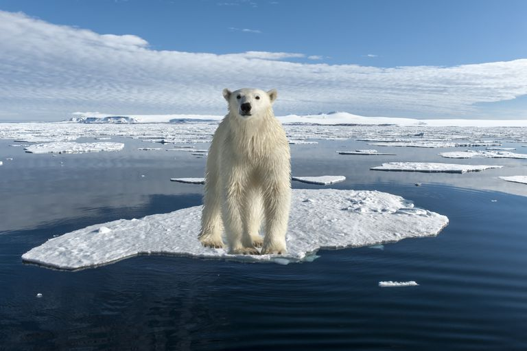 Polar ice melt with polar bear