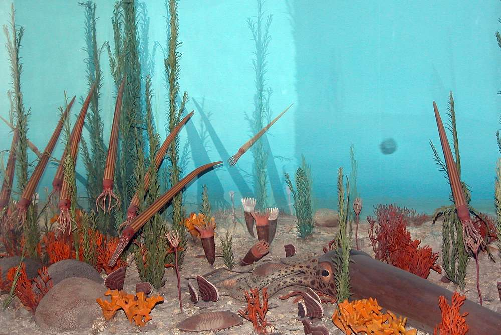 An Ordovician seascape.