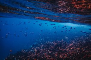 Underwater view of a coral reef ecosystem teeming with aquatic life.