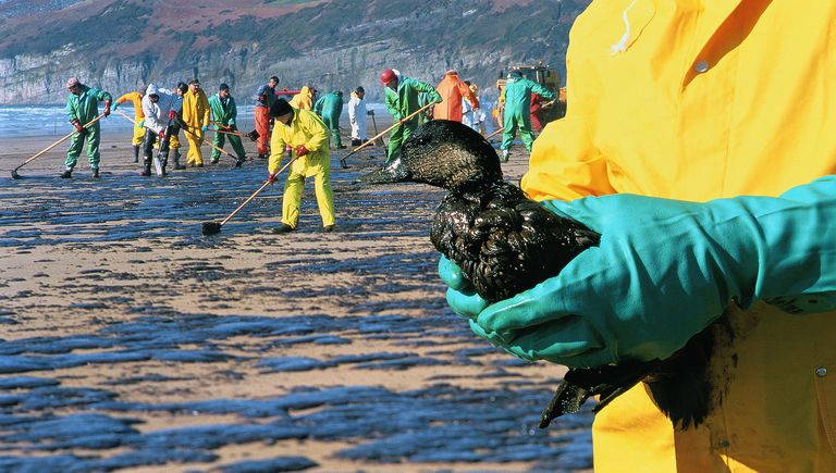 Workers wearing protective gear clean up an oil spill. In the foreground, one of the workers holds a bird.