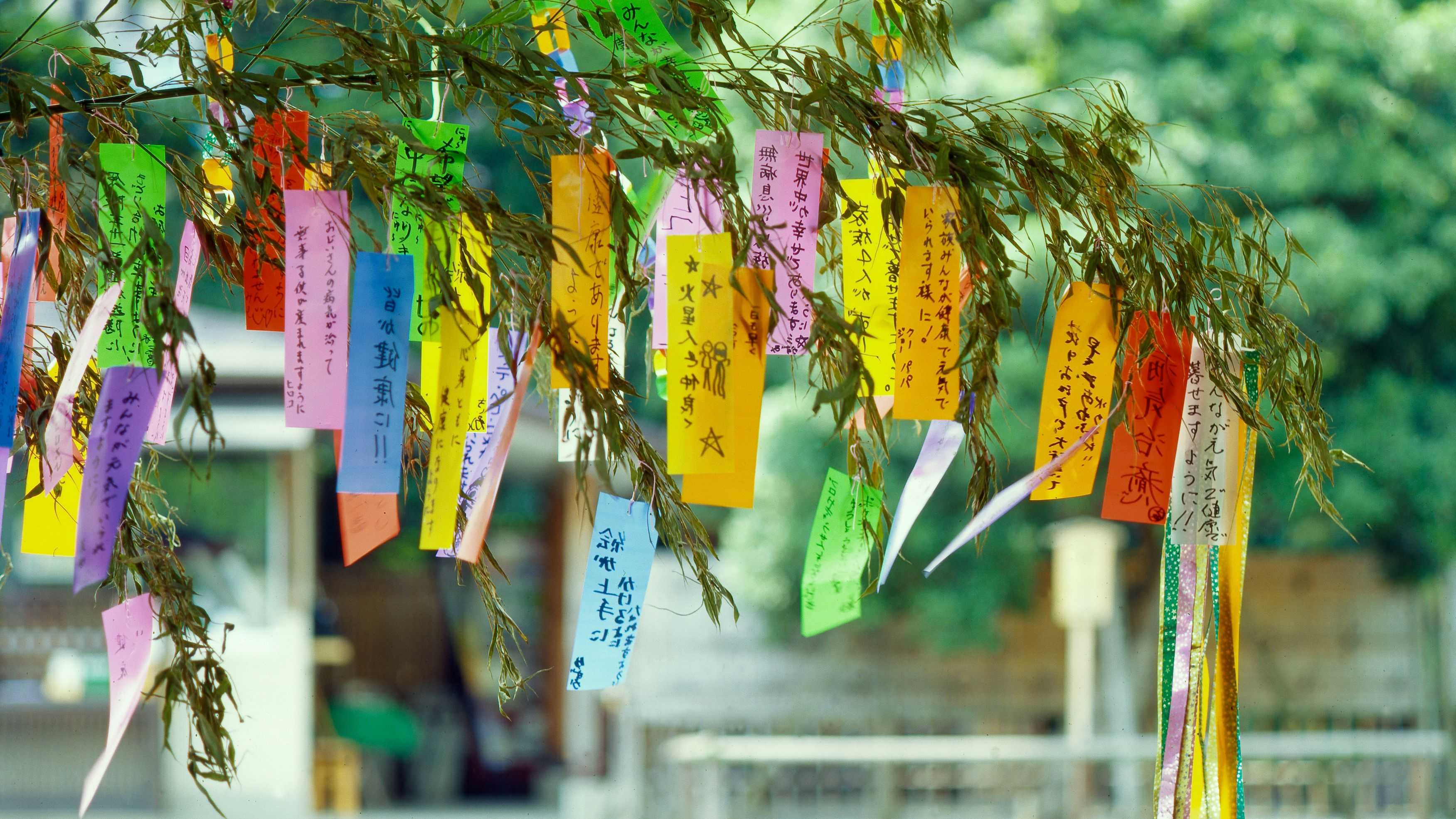 The Tanabata Festival in Japan and the Tanabata Story