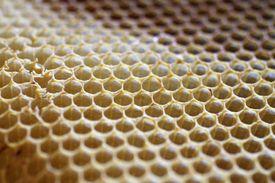 Honeycomb closeup.