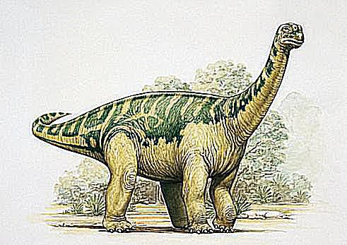 Of Dinosaurs Dinosaur Names With Pictures