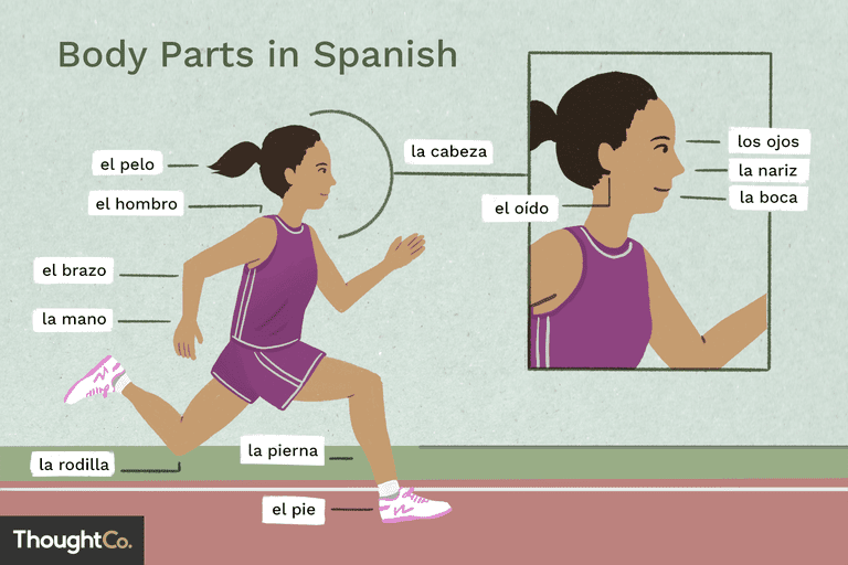 Labeled body parts in Spanish