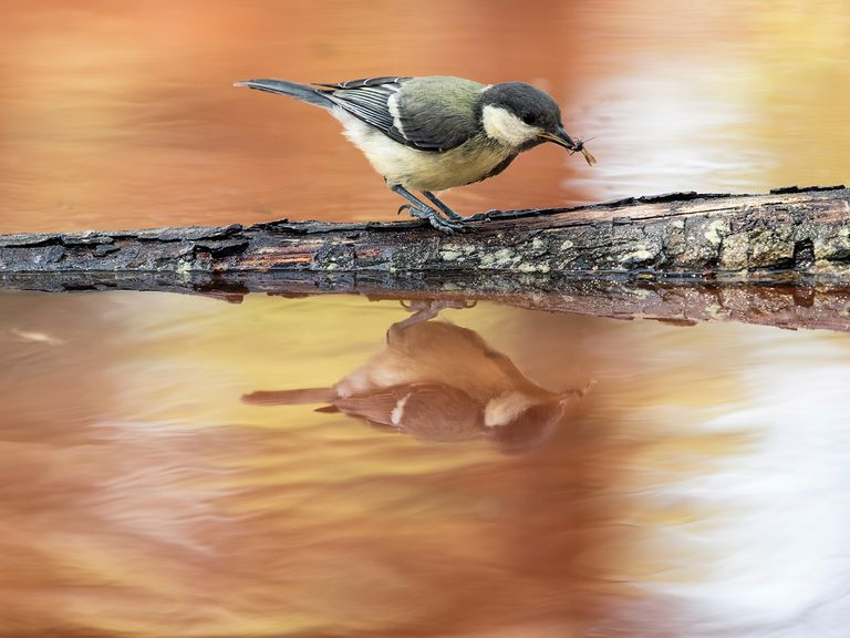 Bird on a log eating an insect