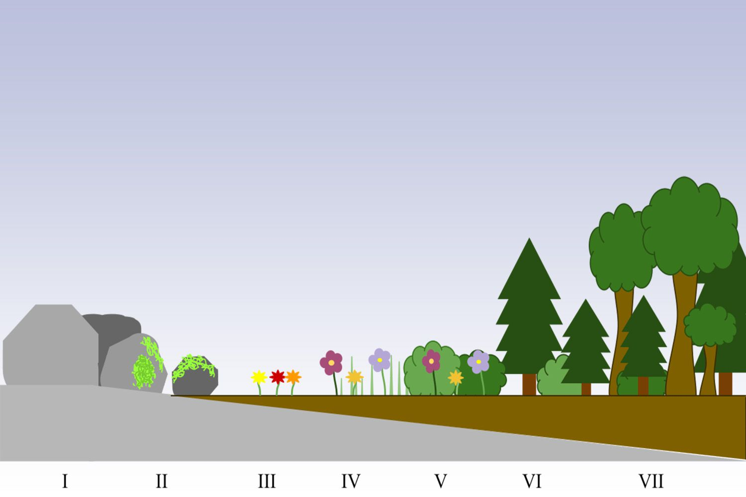 Stages of primary succession
