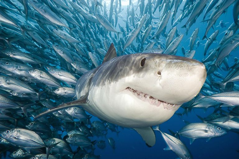 Shark Attacks: Can Certain Weather Increase Incidents?