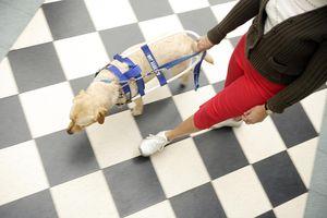 Mujer ciega con su perro-guía.