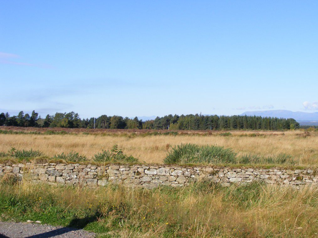 Looking west towards the Jacobite lines from the Government Army's position. The Jacobite position is marked with white poles and blue flags.