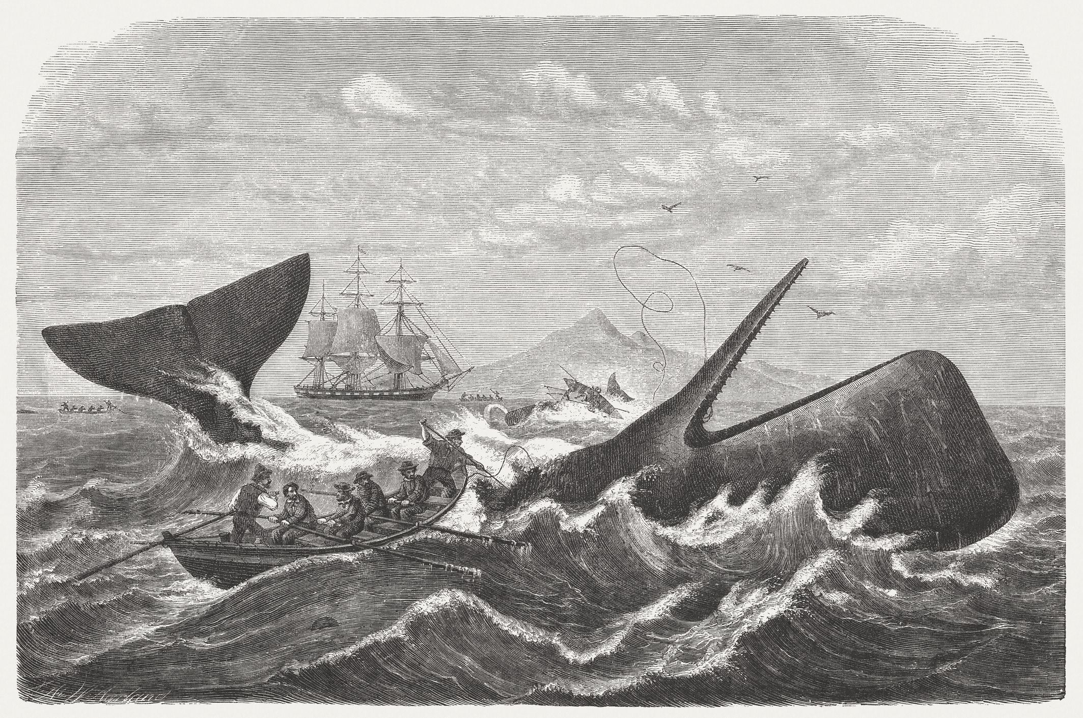 Who Are the Characters in Moby-Dick?