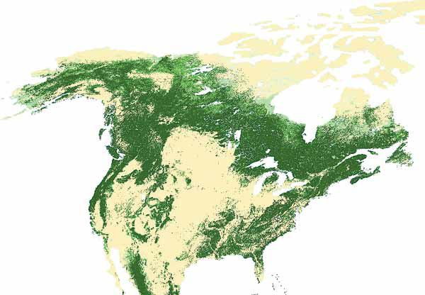 Map Of World Forests.World Forest Cover Type Maps And Natural Tree Ranges