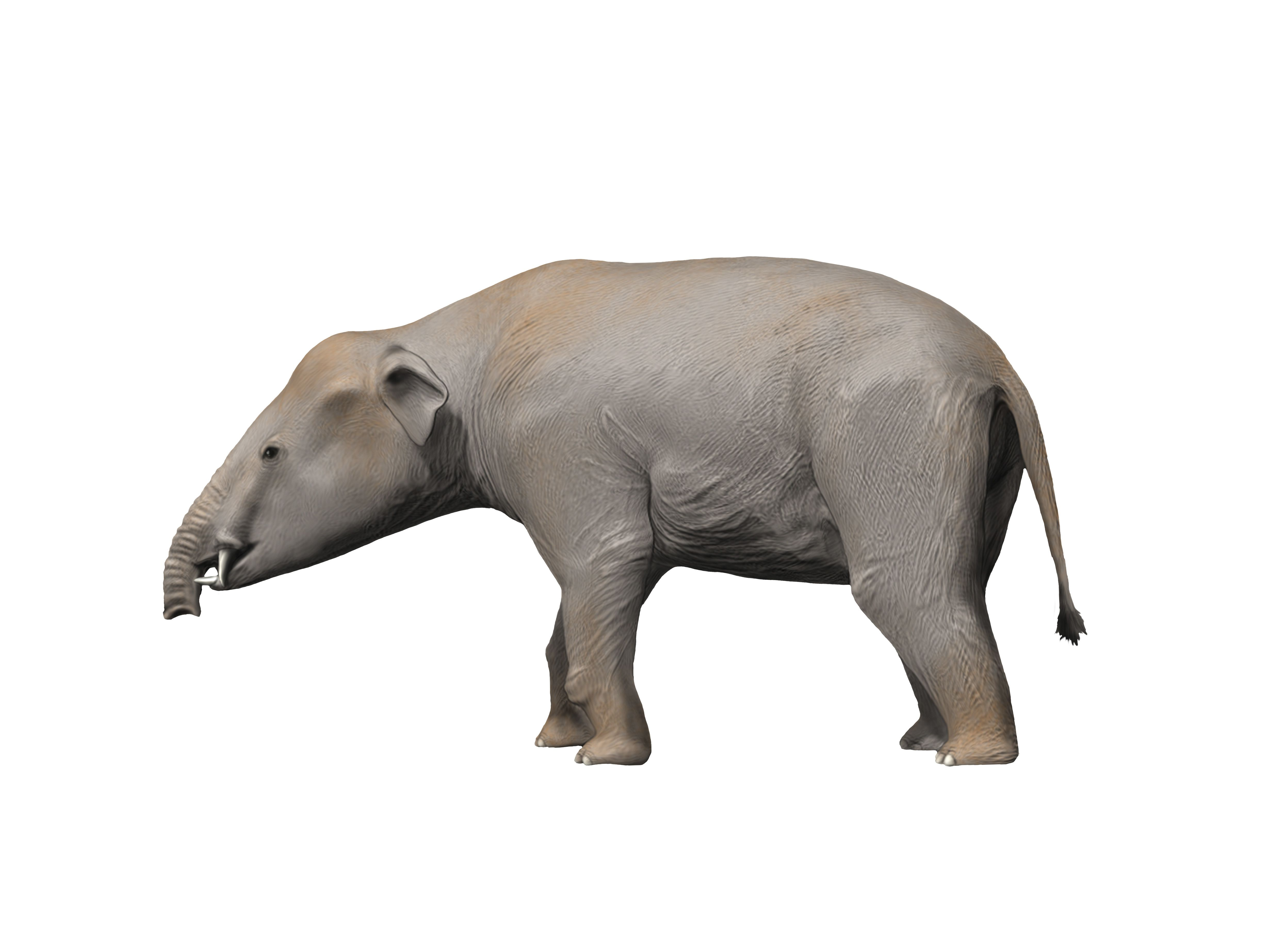 Palaeomastodon graphic rendering