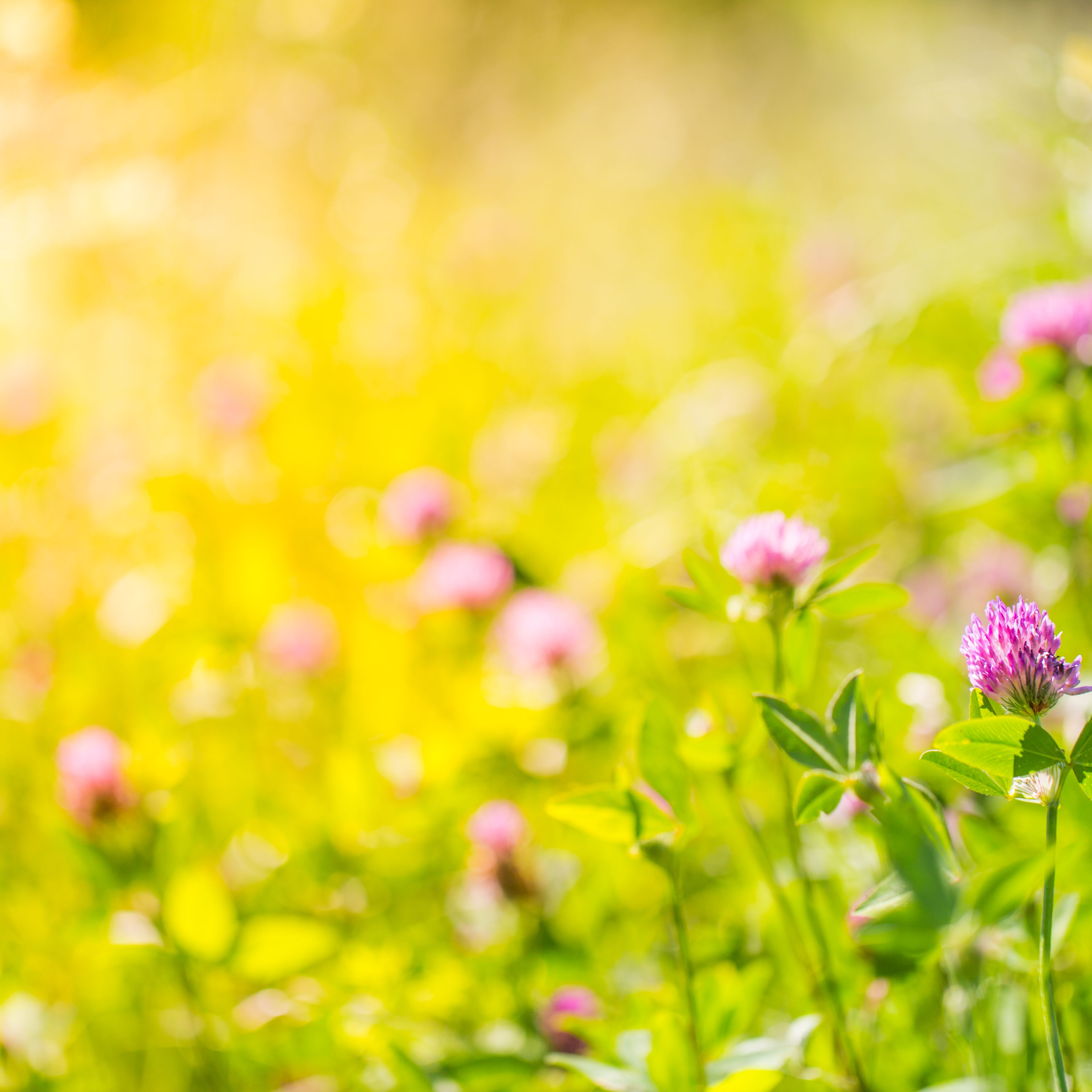 amazing summer nature meadow flowers sunlight day landscape inspirational nature background 5a563c37eb4d b3