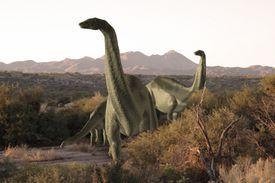 Apatosauruses
