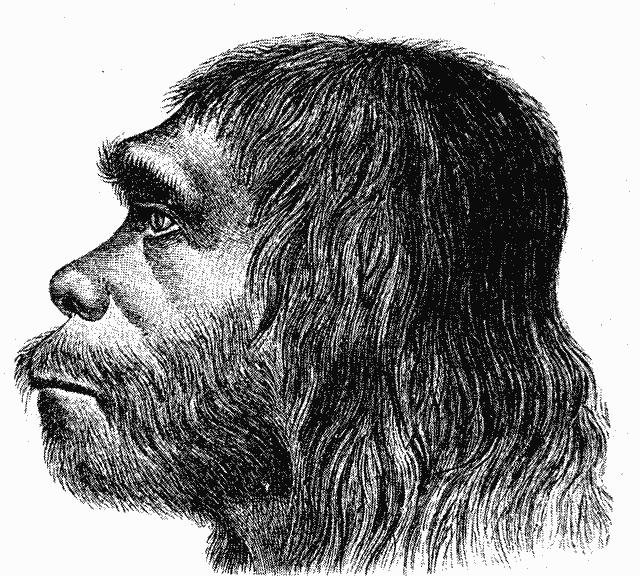 A reconstruction of <i>Homo neanderthalensis</i>