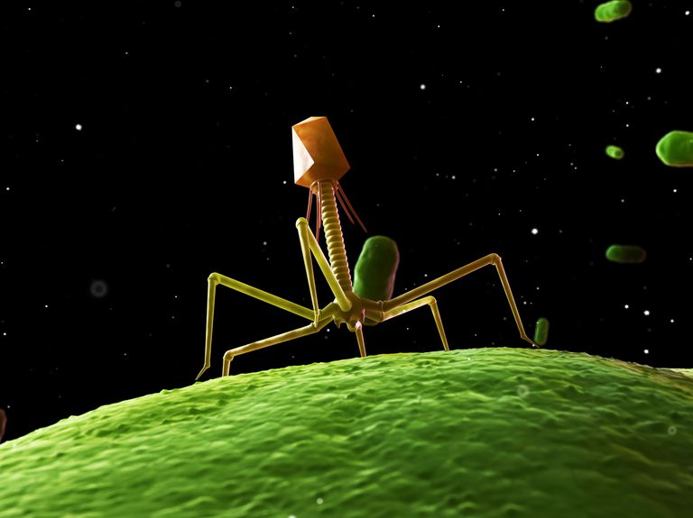 Bacteriophage, computer artwork.