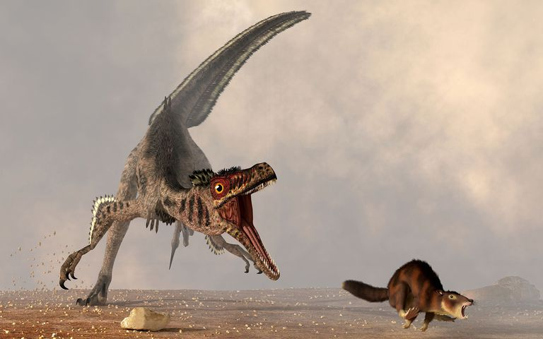 A Velociraptor Chasing a Rat Sized Mammal