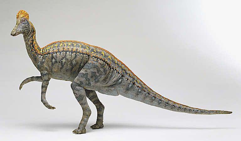 corythosaurus model
