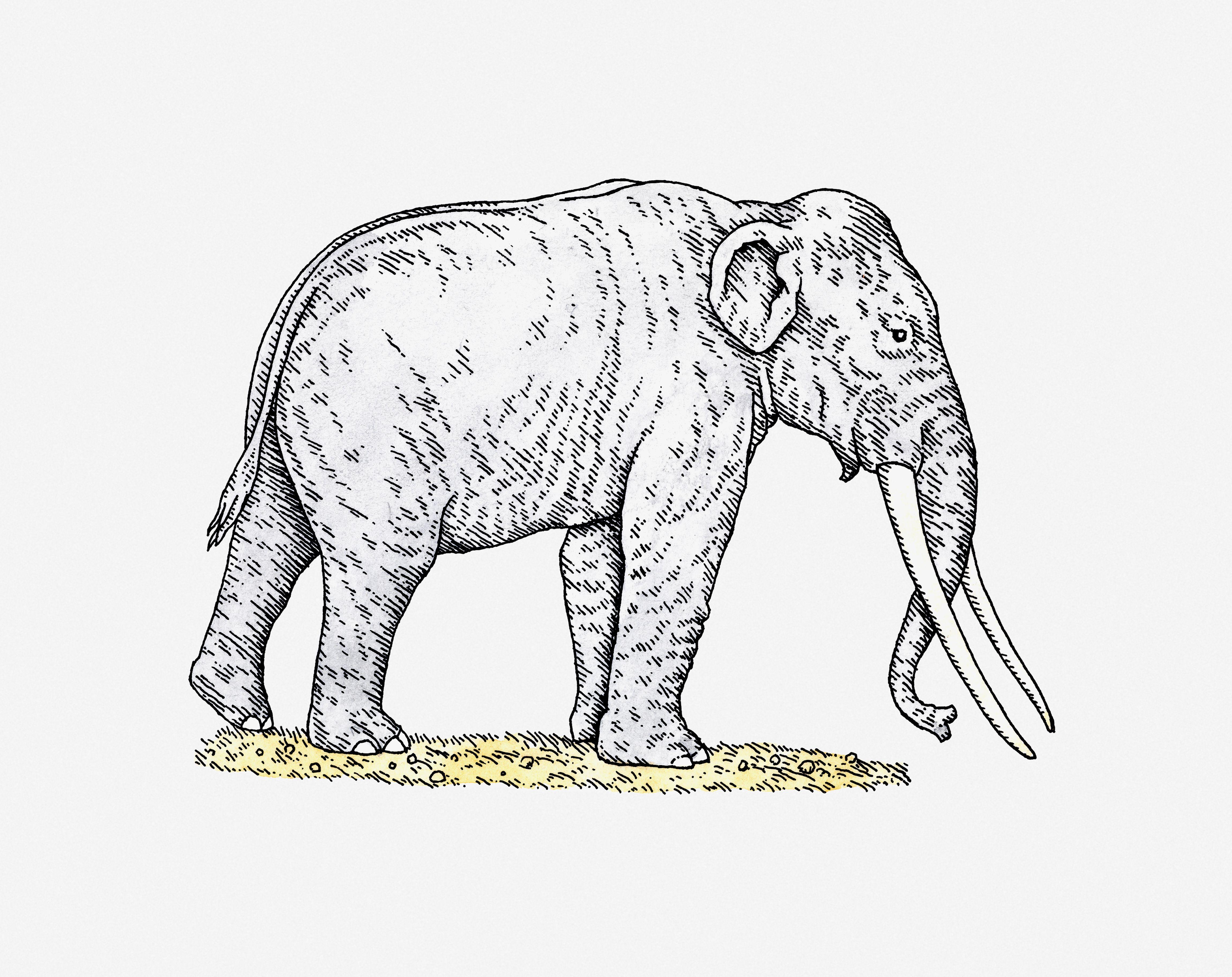 Illustration of Straight-tusked Elephant (Palaeoloxodon antiquus) from Pleistocene epoch