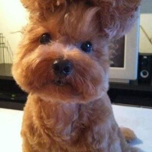 Embarrassed Pets Should Fire Their Groomers Immediately