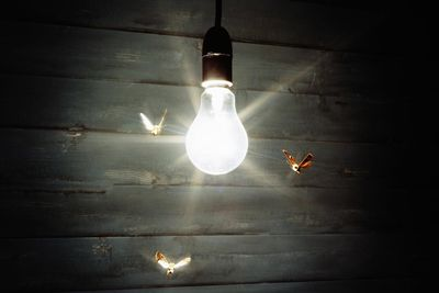 Why Are Bugs Attracted To Lights