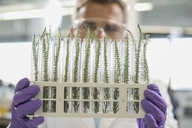 Man checking on plants during an experiment