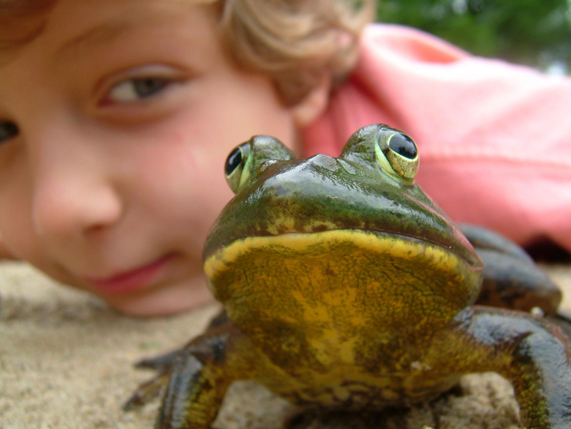 Frog Anatomy - Internal and External
