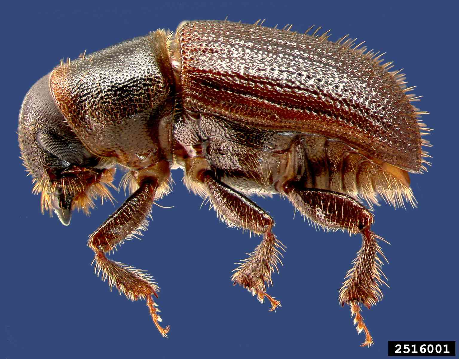 An Index of 22 Common Insect Pests Harmful to Trees