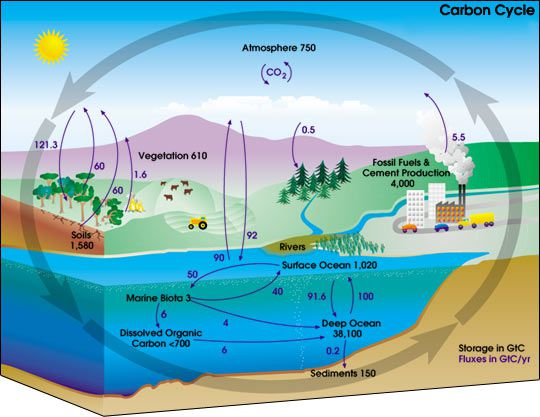 Learn about the carbon cycle the carbon cycle describes the storage and exchange of carbon between the earths biosphere atmosphere hydrosphere and geosphere nasa ccuart Images