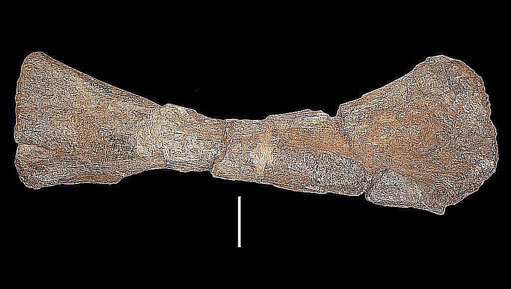 panamericansaurus