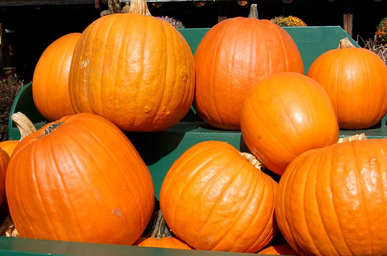 Pumpkins displayed at a roadside stand.