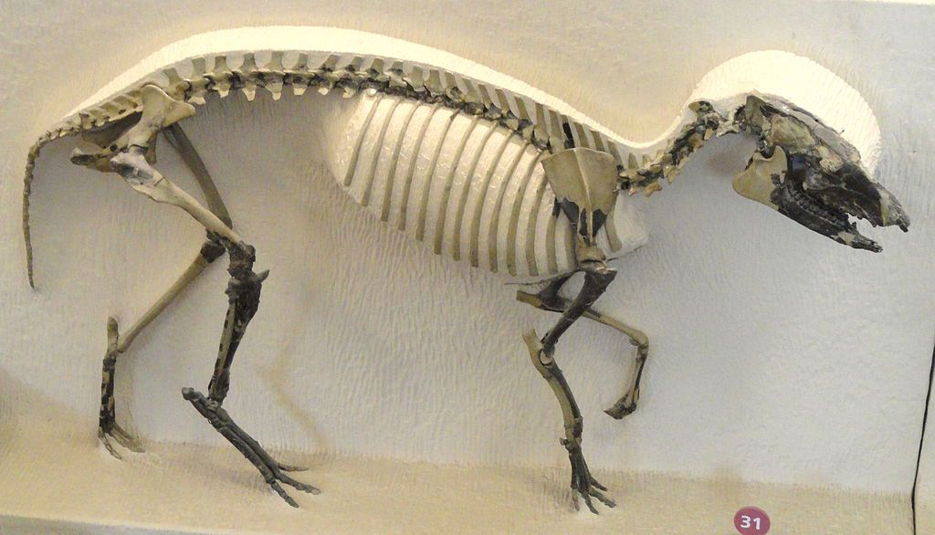Orohippus fossils