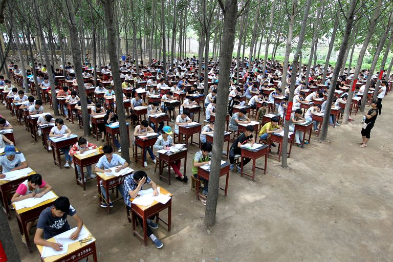 Exam In Poplar Woods