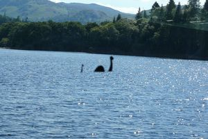 Image purportedly of the Loch Ness Monster swimming in Loch Ness on a sunny day.